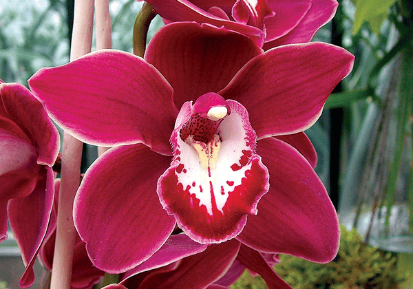 Orchid Love No.2