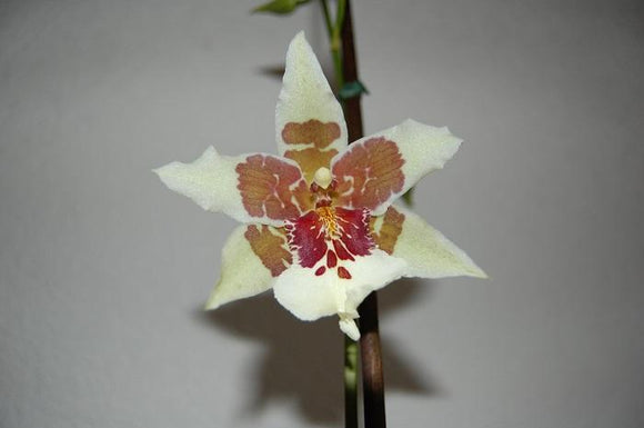 Photo Flowers - Amazing Nature - Orchid Passion 27 x 5 pcs - top quality approved by www.postcardsmarket.com specialists