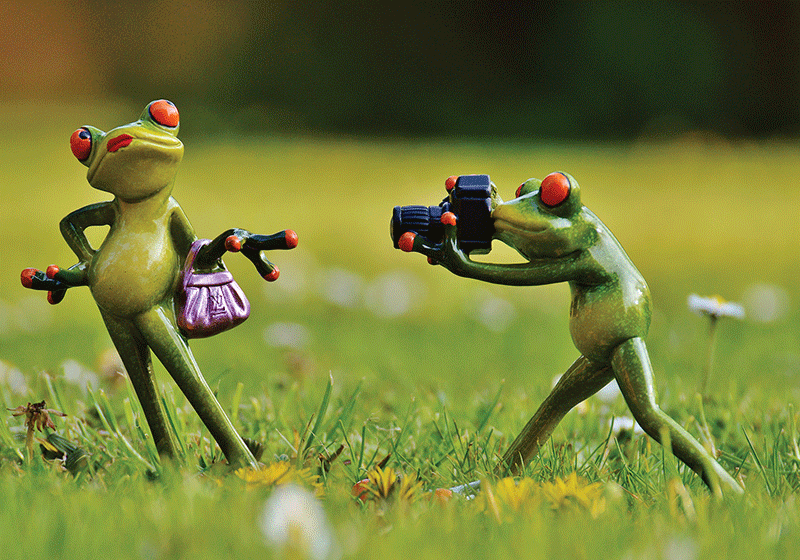 Photo: Happy Frog: The Photographer 8/9 (bundle x 3 pieces) - top quality approved by www.postcardsmarket.com specialists