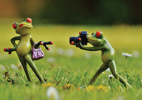 Photo: Happy Frog: The Photographer 8/9 - top quality approved by www.postcardsmarket.com specialists