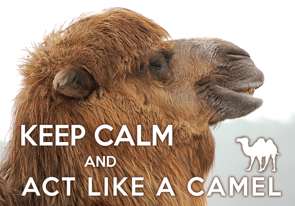 Keep calm and act like a Camel
