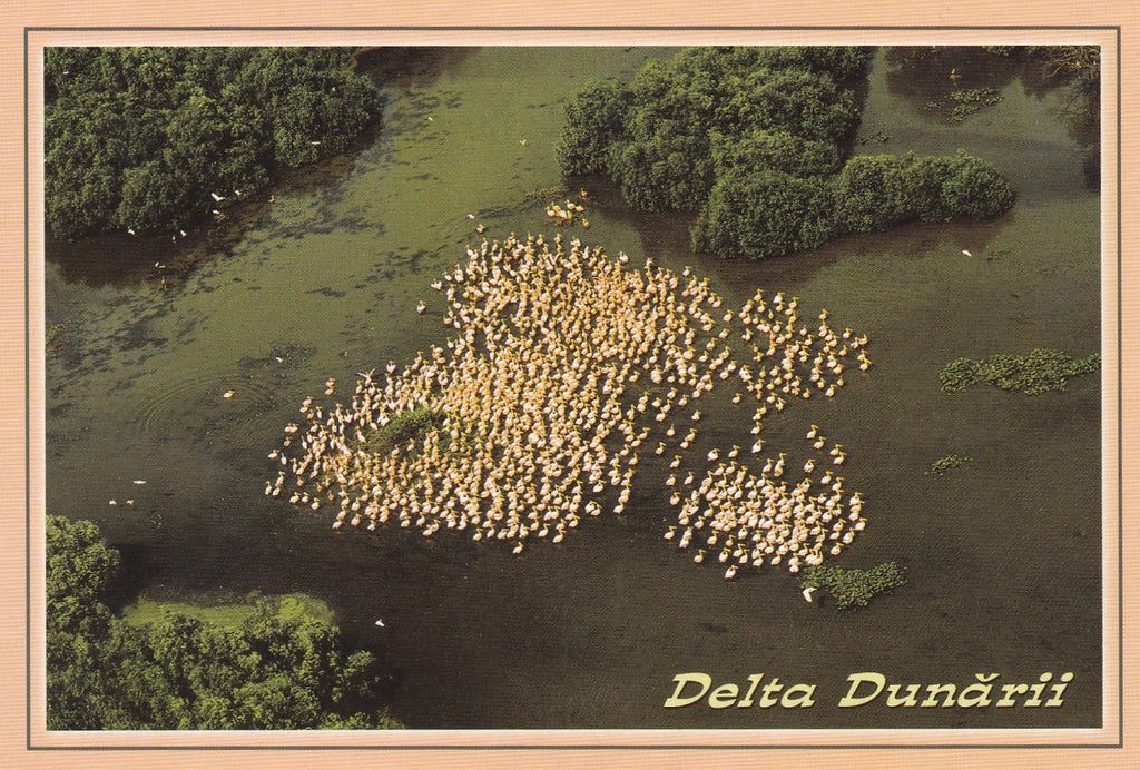 Market Corner: Bundle of 5 x LAD Romania - The Danube Delta - UNESCO list N 246-16 - top quality approved by www.postcardsmarket.com specialists