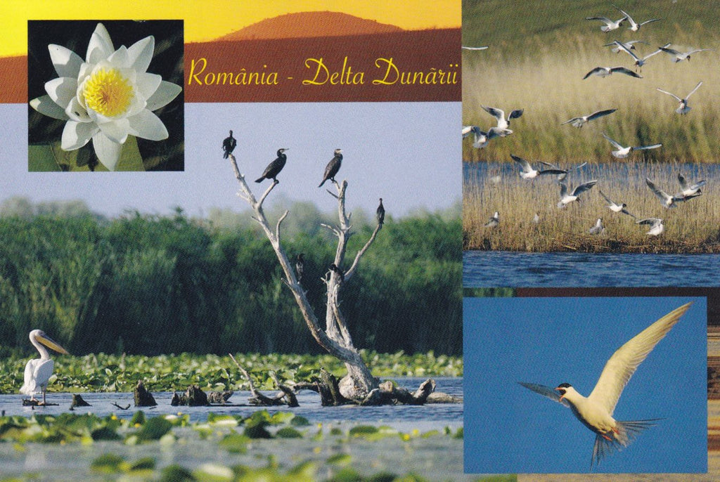 Market Corner: Bundle of 5 x LAD Romania - The Danube Delta - UNESCO list N 292-19 - top quality approved by www.postcardsmarket.com specialists