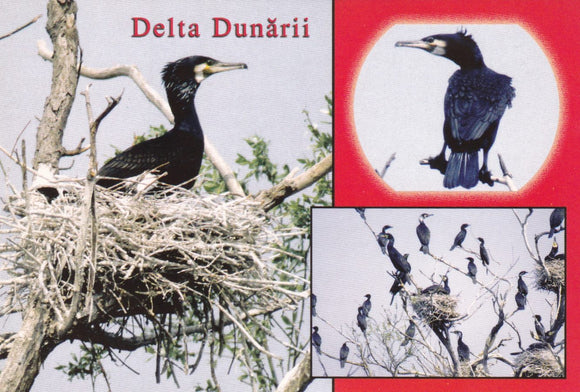 Market Corner: Bundle of 5 x LAD Romania - The Danube Delta - UNESCO list N 245-16 - top quality approved by www.postcardsmarket.com specialists