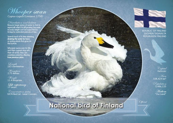National Bird of Finland - top quality approved by www.postcardsmarket.com specialists