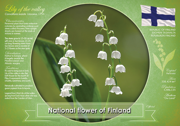National flower of Finland - top quality approved by www.postcardsmarket.com specialists