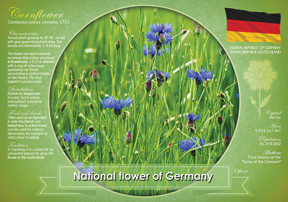National flower of Germany - top quality approved by www.postcardsmarket.com specialists