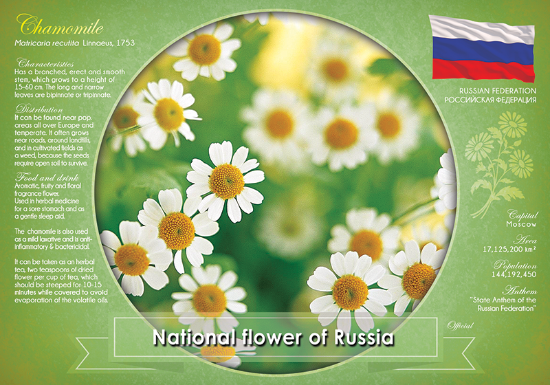 National flower of Russia - top quality approved by www.postcardsmarket.com specialists