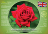 National flower of the United Kingdom