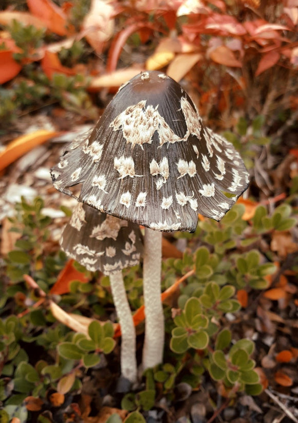 Photo: Miss Mushroom - top quality approved by www.postcardsmarket.com specialists