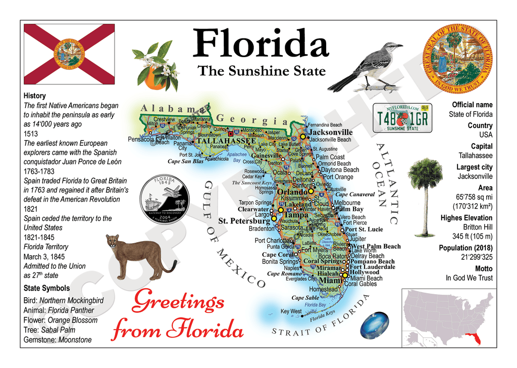United States - FLORIDA (MOTW US) - top quality approved by www.postcardsmarket.com specialists