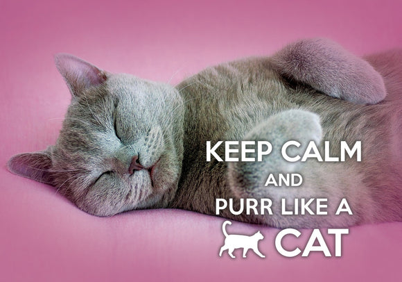 Photo: Keep Calm and Purr like a cat (bundle x 5 pieces) - top quality approved by www.postcardsmarket.com specialists