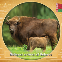 National Animal of Belarus - top quality approved by www.postcardsmarket.com specialists