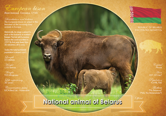 National Animal of Belarus - www.postcardsmarket.com