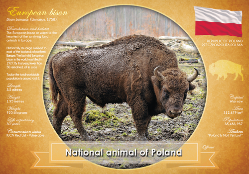 National Animal of Poland - top quality approved by www.postcardsmarket.com specialists