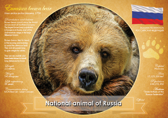 National Animal of Russia - top quality approved by www.postcardsmarket.com specialists