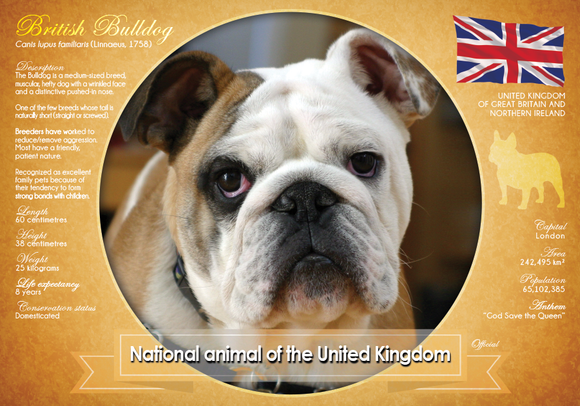 National Animal of the United Kingdom 2 - top quality approved by www.postcardsmarket.com specialists