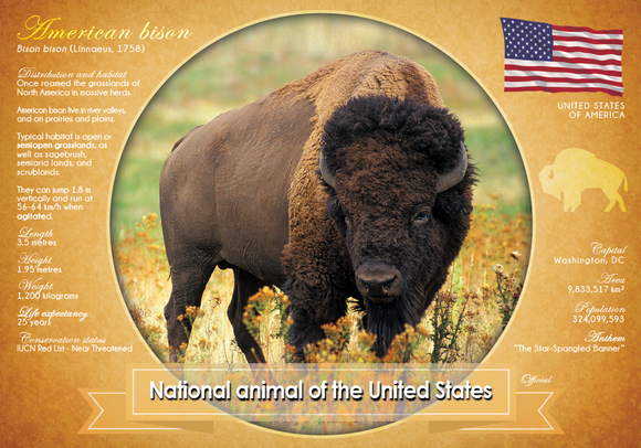National Animal of the United States - top quality approved by www.postcardsmarket.com specialists