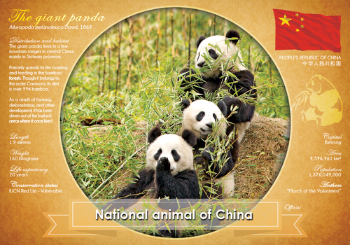 National Animal of China - top quality approved by www.postcardsmarket.com specialists