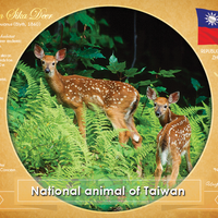 National Animal of Taiwan - top quality approved by www.postcardsmarket.com specialists