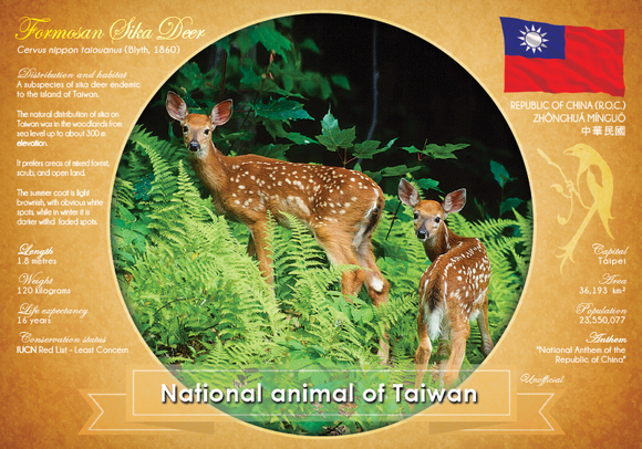 National Animal of Taiwan - Postcards Market