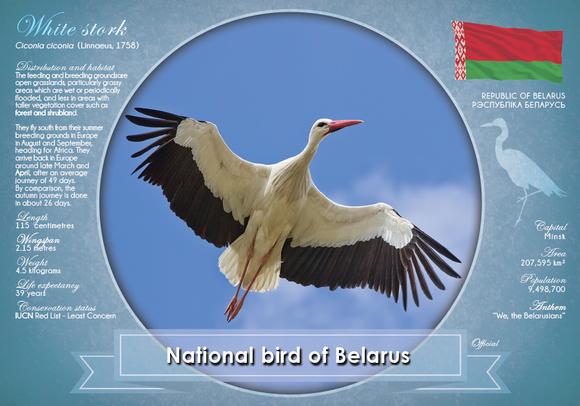 National Bird of Belarus - top quality approved by www.postcardsmarket.com specialists