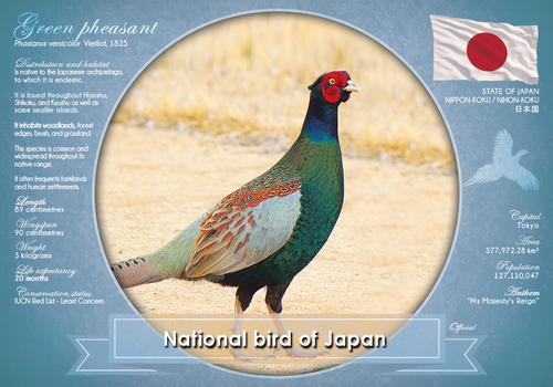 National Bird of Japan - top quality approved by www.postcardsmarket.com specialists