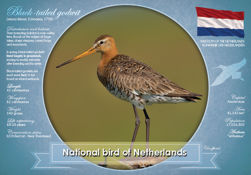 National Bird of Netherlands - top quality approved by www.postcardsmarket.com specialists