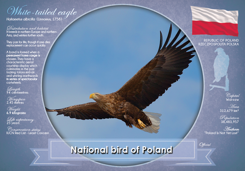 National Bird of Poland - top quality approved by www.postcardsmarket.com specialists
