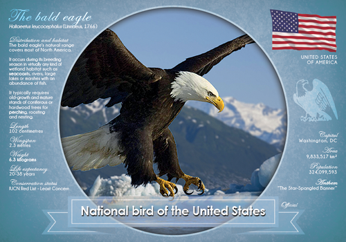 National Bird of the United States - top quality approved by www.postcardsmarket.com specialists