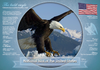 National Bird of the United States