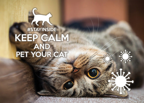 Photo #stayinside - pet your cat (bundle x 5 pieces) - top quality approved by www.postcardsmarket.com specialists