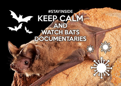 Photo #stayinside - watch bats documentary (bundle x 5 pieces) - top quality approved by www.postcardsmarket.com specialists