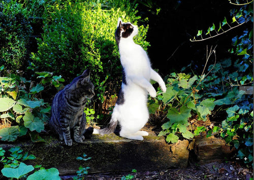 Photo: Cat curiosity (bundle x 5 pieces) - top quality approved by www.postcardsmarket.com specialists