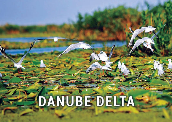 Photo Danube Delta - Romania UNESCO WHS site - 01 Flying birds - top quality approved by www.postcardsmarket.com specialists