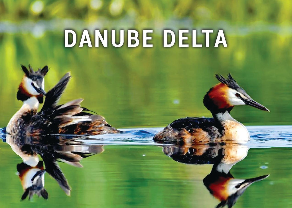 Photo Danube Delta - Romania UNESCO WHS site - 04 Green life (bundle x 5 pieces) - top quality approved by www.postcardsmarket.com specialists