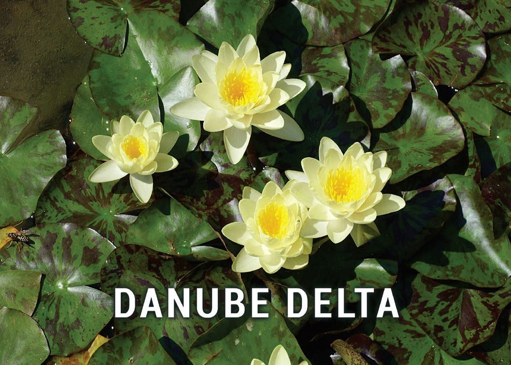 Photo: Danube Delta - Romania UNESCO WHS site - 07 Water Lilies (bundle x 5 pieces) - top quality approved by www.postcardsmarket.com specialists