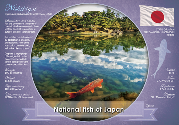 National Fish of Japan - top quality approved by www.postcardsmarket.com specialists