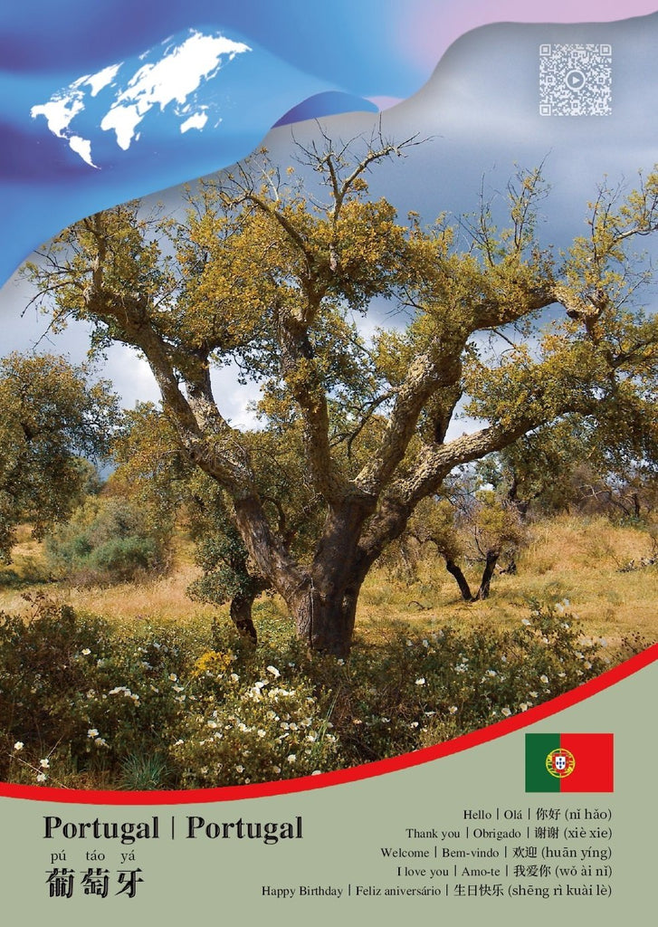 CCUN Postcard Portugal - model 2 - top quality approved by www.postcardsmarket.com specialists