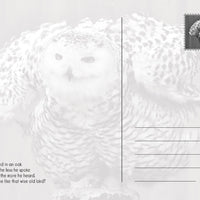 Photo Birds: Wise Owl (bundle of 5 cards) - top quality approved by www.postcardsmarket.com specialists