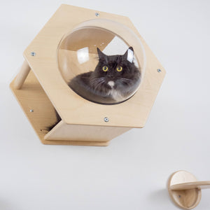 Wood Wall Hexagon For Cat With Acrylic Glass 5 colors