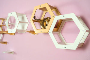 Cat Wall Set Furniture For Pet Of 11 Items