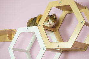 Set of 9 items Cat Modern Furniture