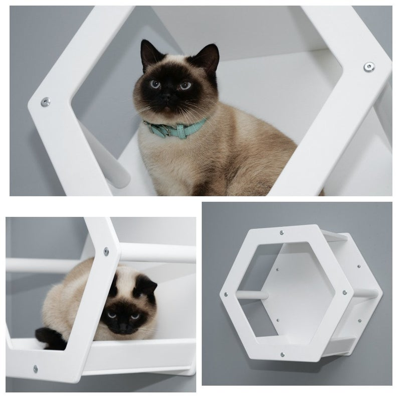 Modern Cat Hexagon In White Color