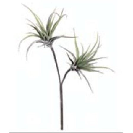 Tillandsia Spray