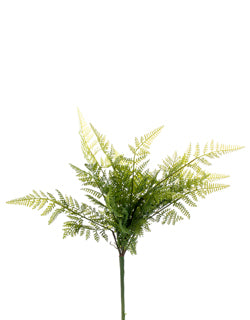 Small Lace Fern