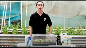Learn how to clone your own plants!