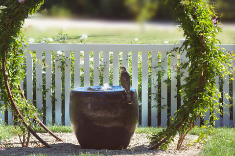 garden wildlife bird red tailed hawk birdbath