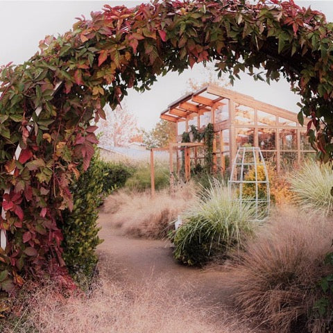 fall colors sunset magazine ornamental grasses trellis greenhouse