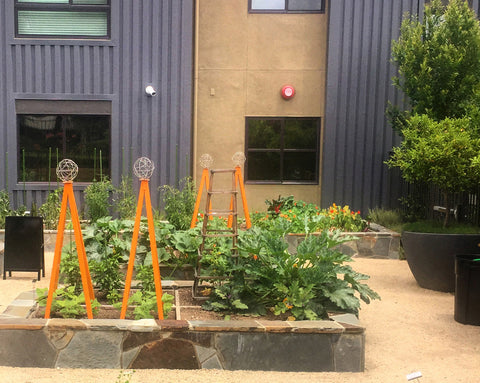 urban community garden vegetable beds